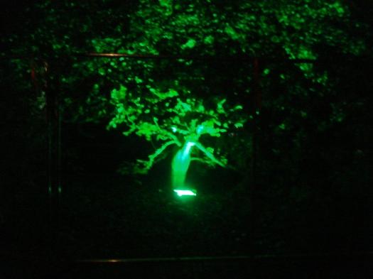Spotlight lit tree.