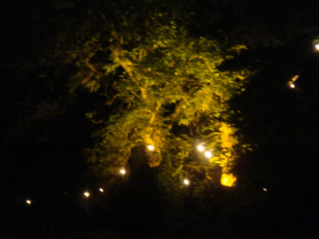 A spotlight lit tree.